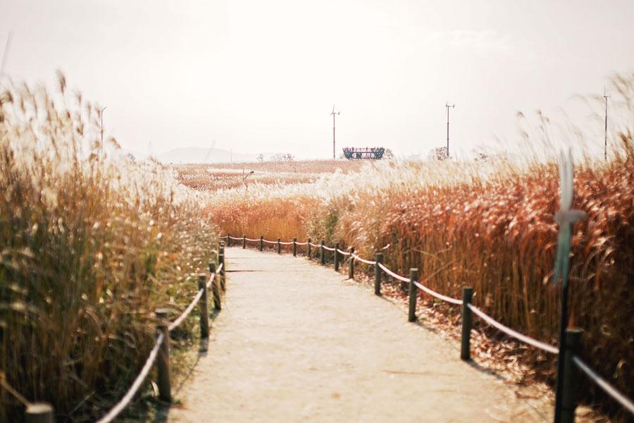 fields-of-gold-17