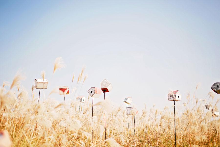 fields-of-gold-33