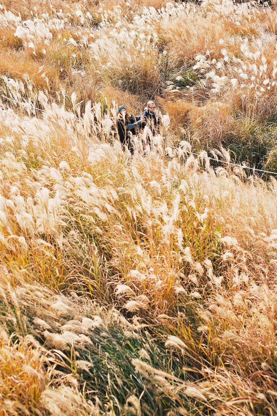 fields-of-gold-62