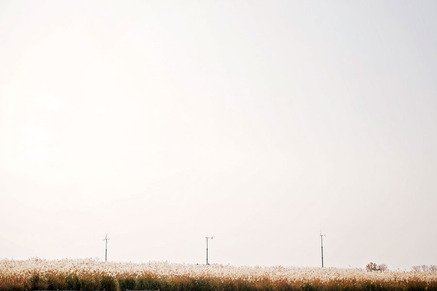 fields-of-gold-66