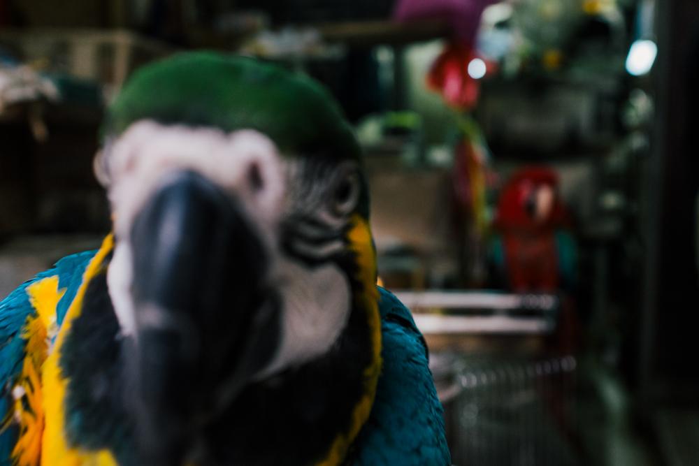 bird-160225