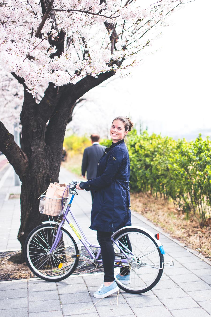 cherry-blossom-150405-22