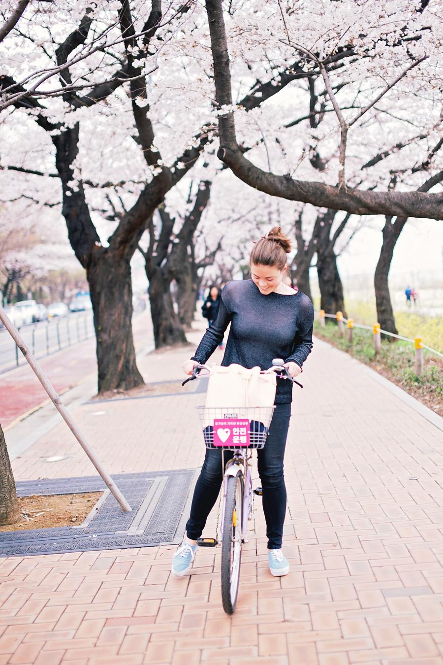 cherry-blossom-150405-40