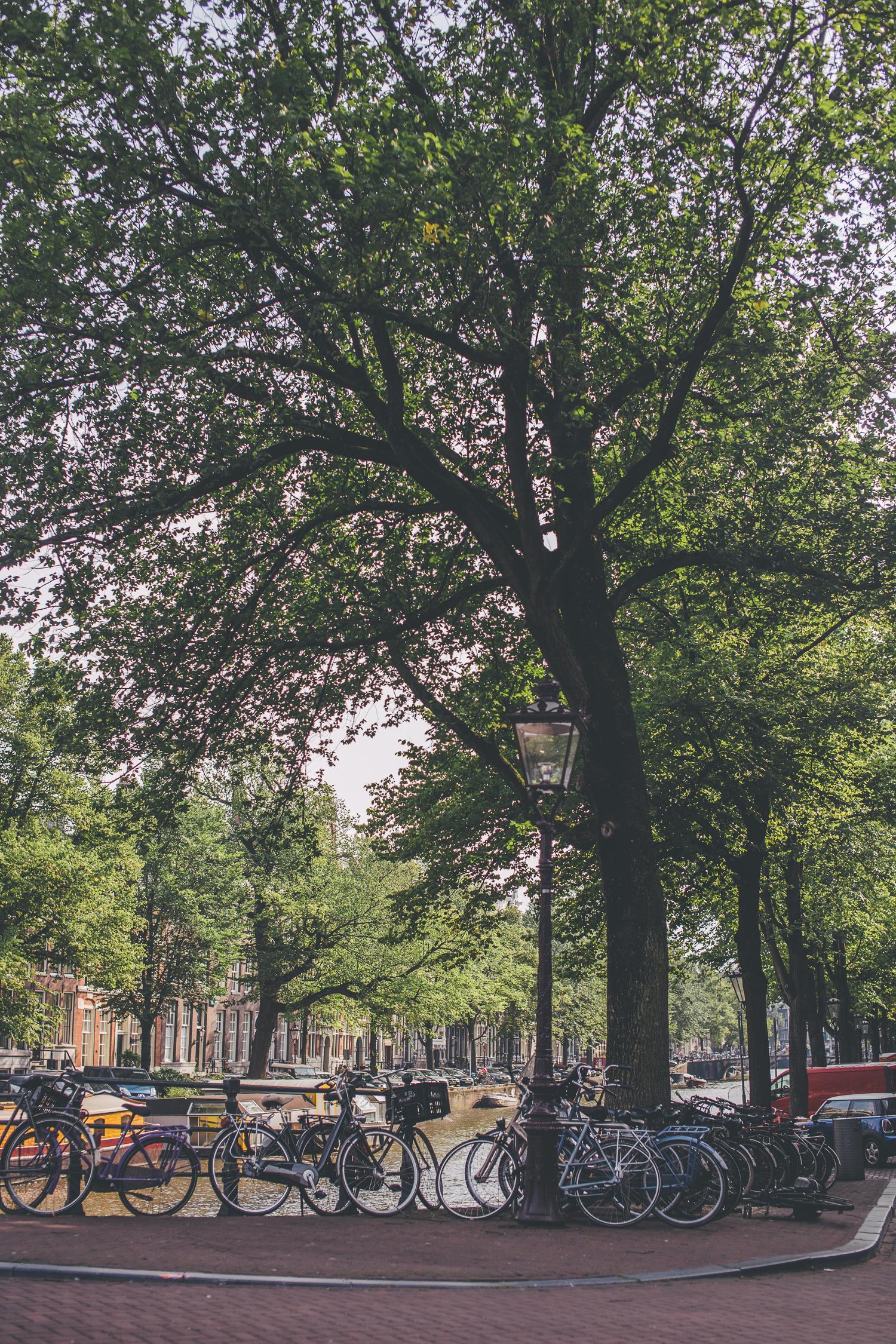 Amsterdam-150823-56
