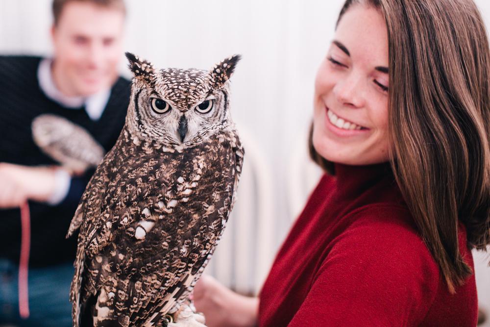 owls-151119-16