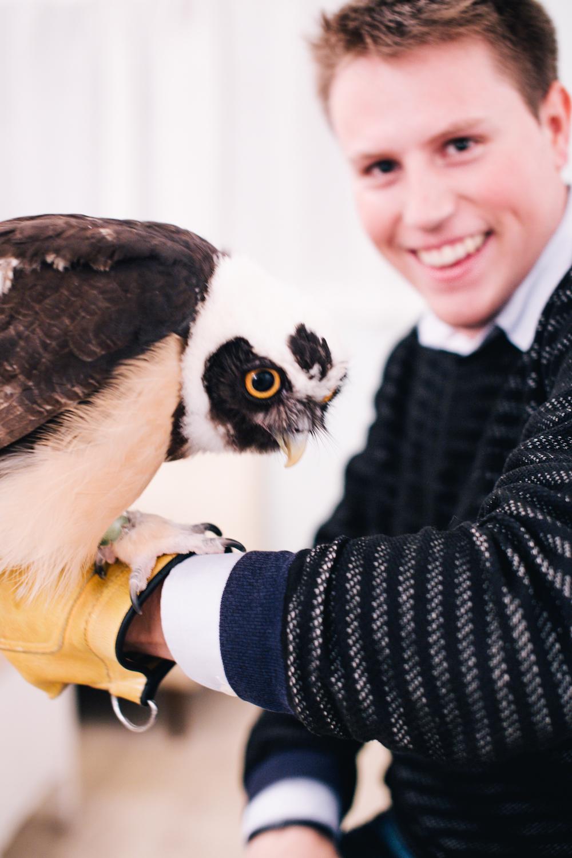 owls-151119-23