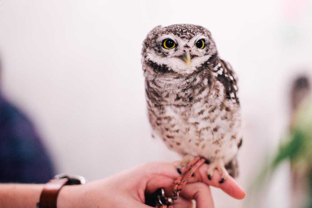 owls-151119-24