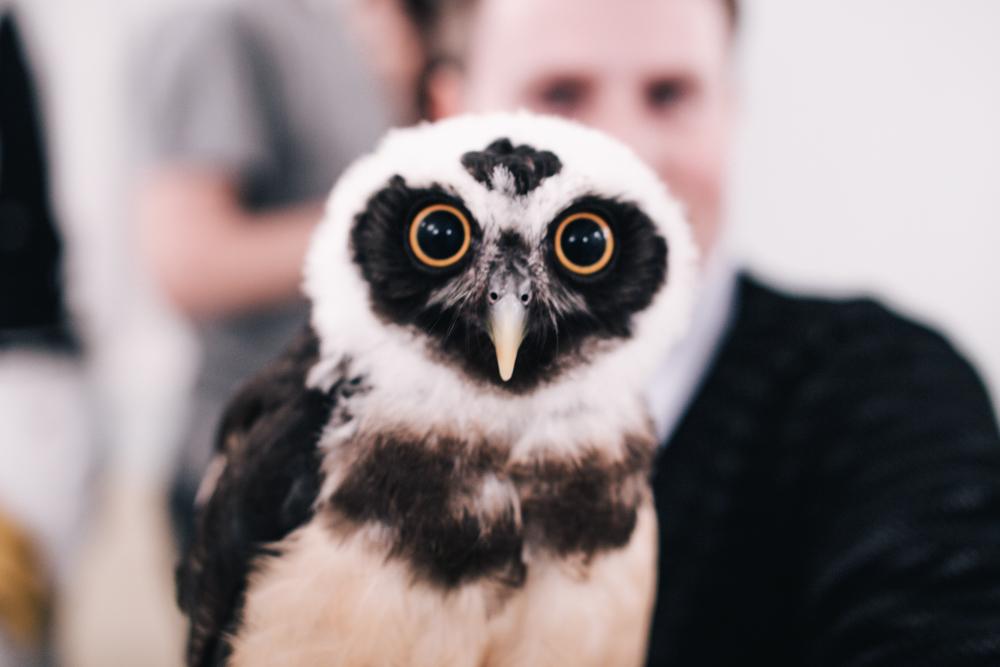 owls-151119-27