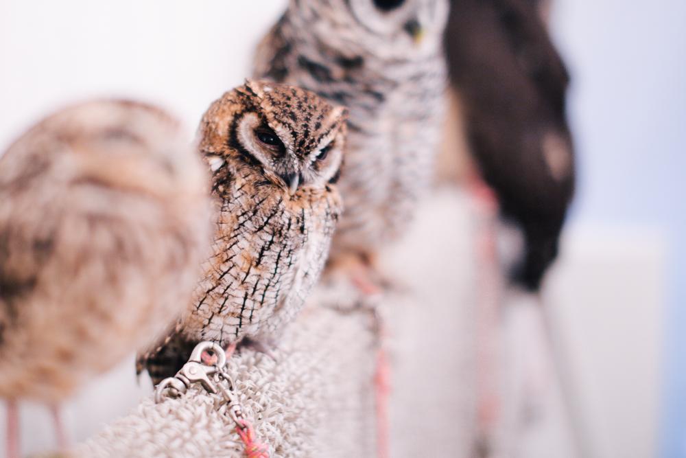 owls-151119-3