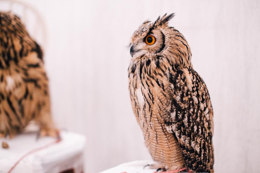 owls-151119-30