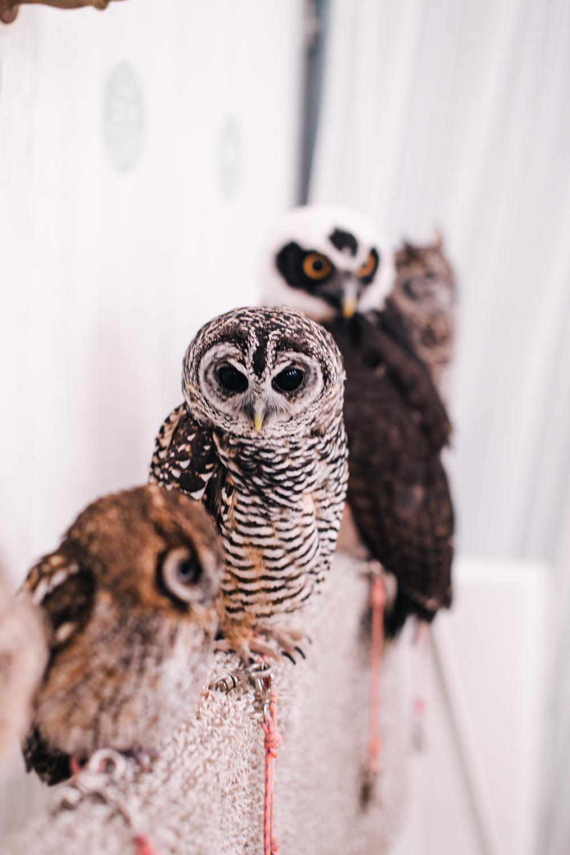 owls-151119-33