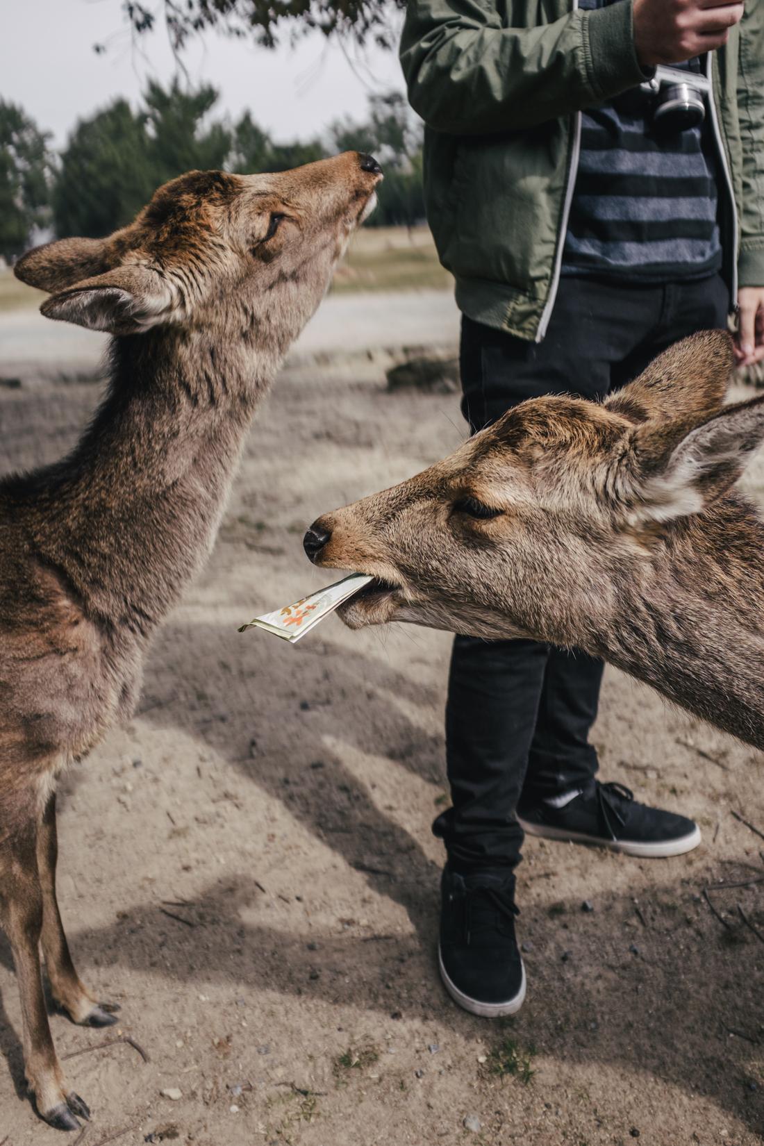 Nara-Park-160306-28
