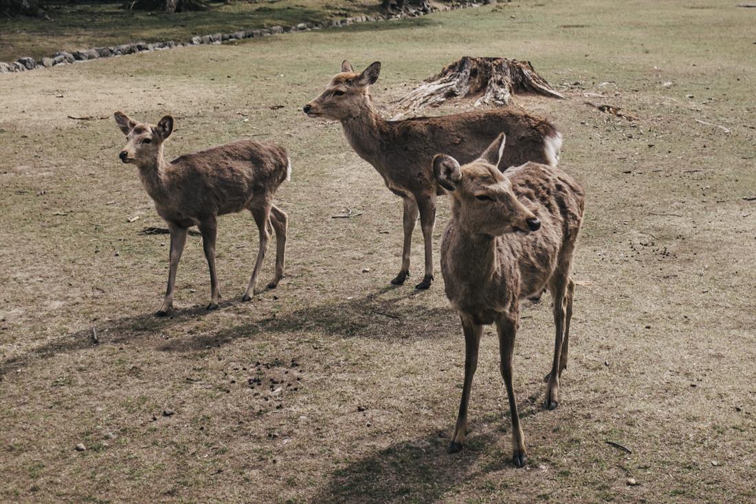 Nara-Park-160306-31