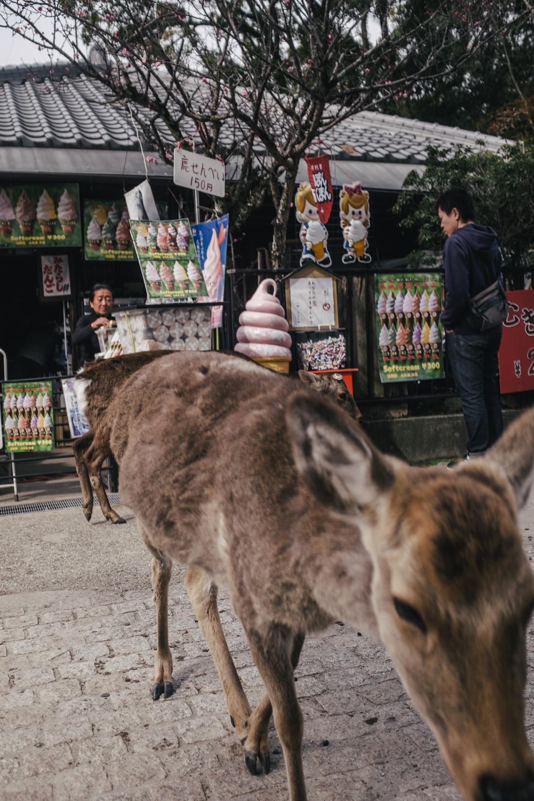 Nara-Park-160306-32