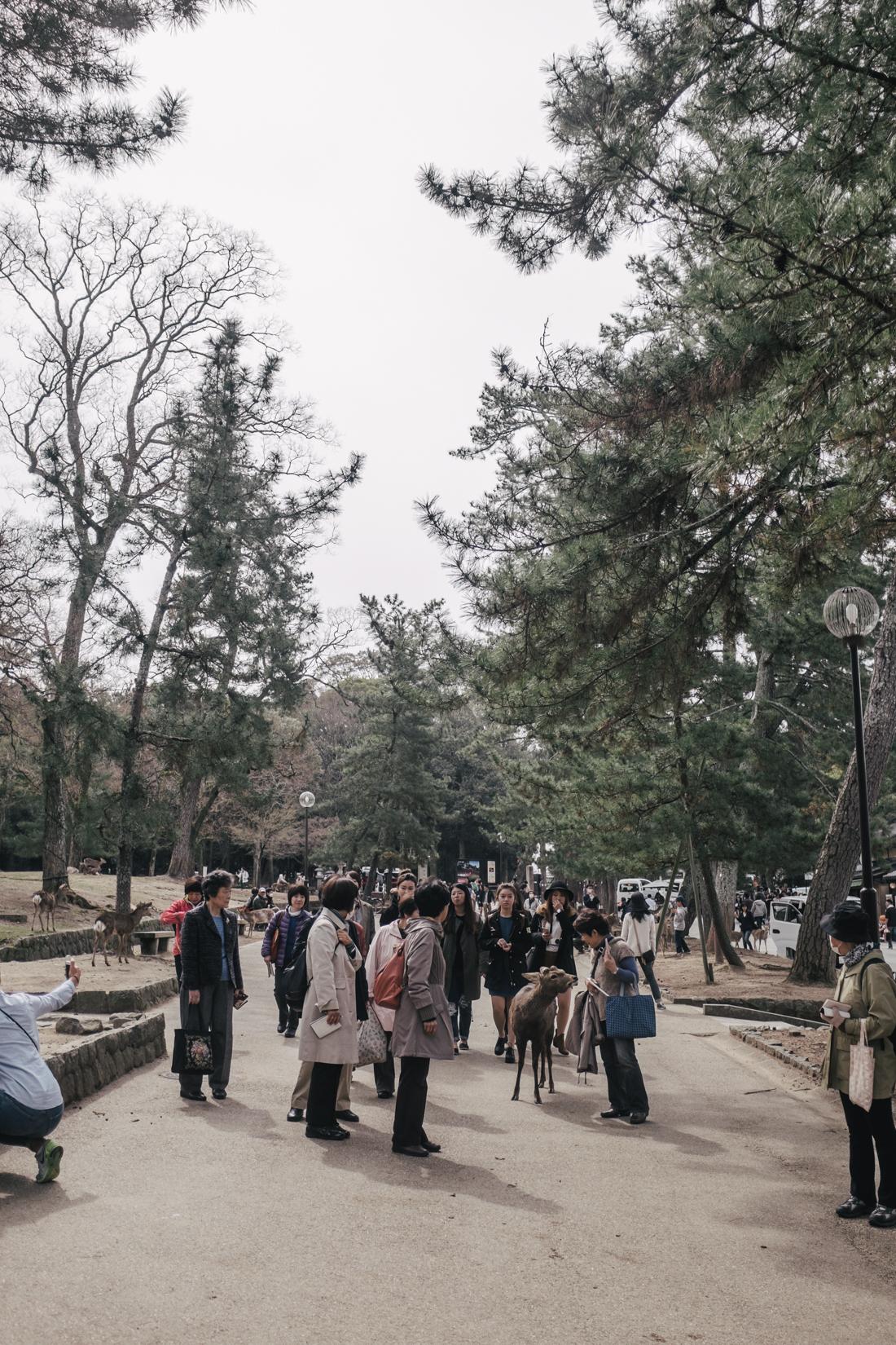 Nara-Park-160306-39