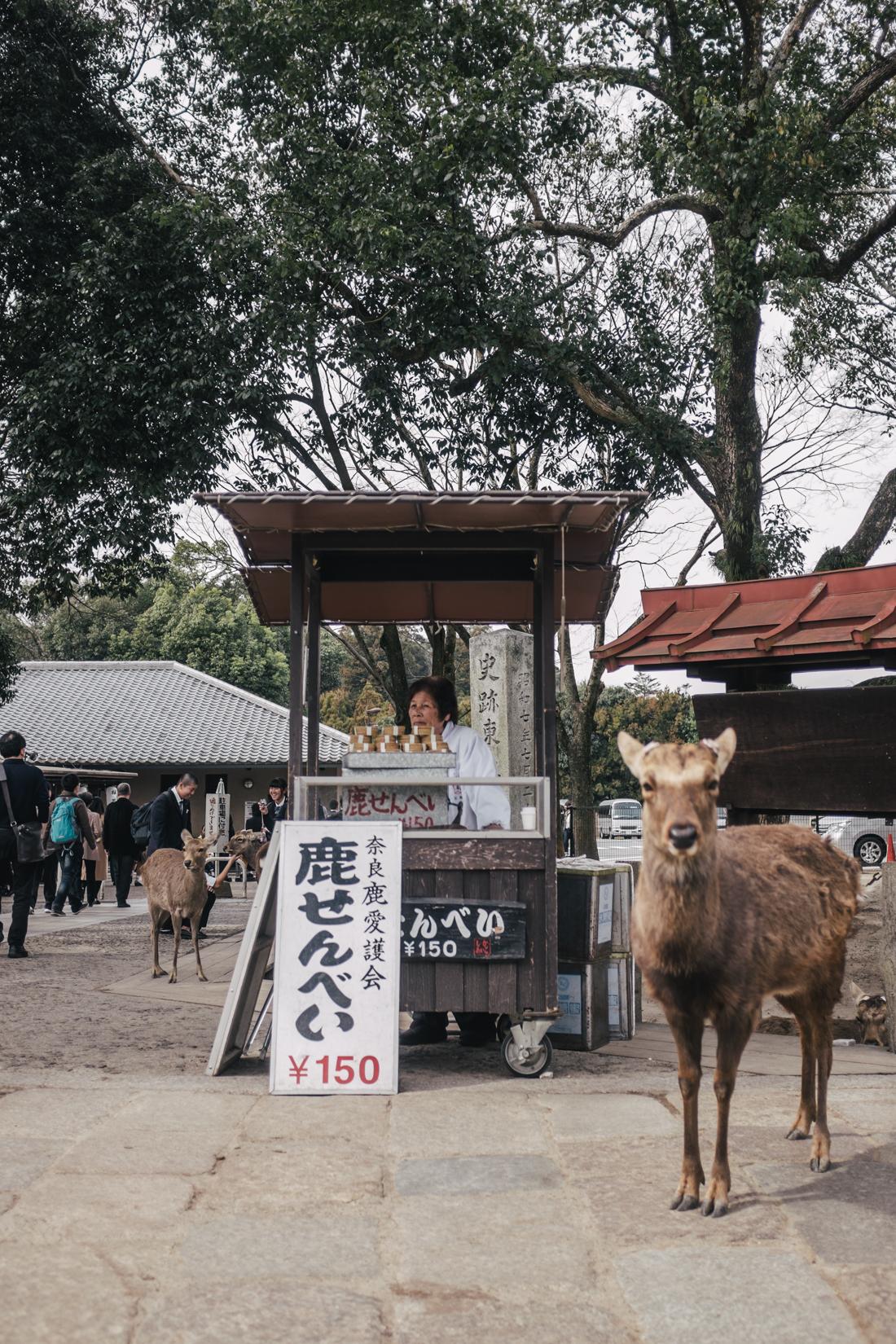 Nara-Park-160306-48