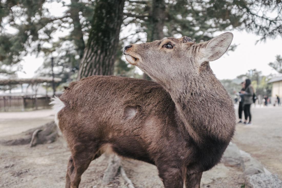 Nara-Park-160306-5