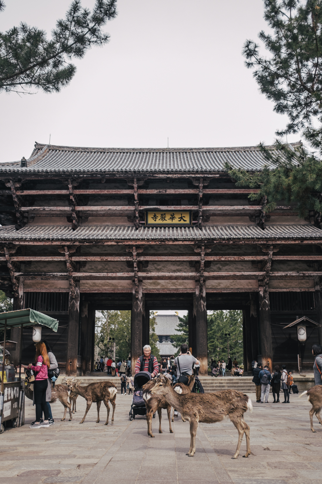 Nara-Park-160306-50