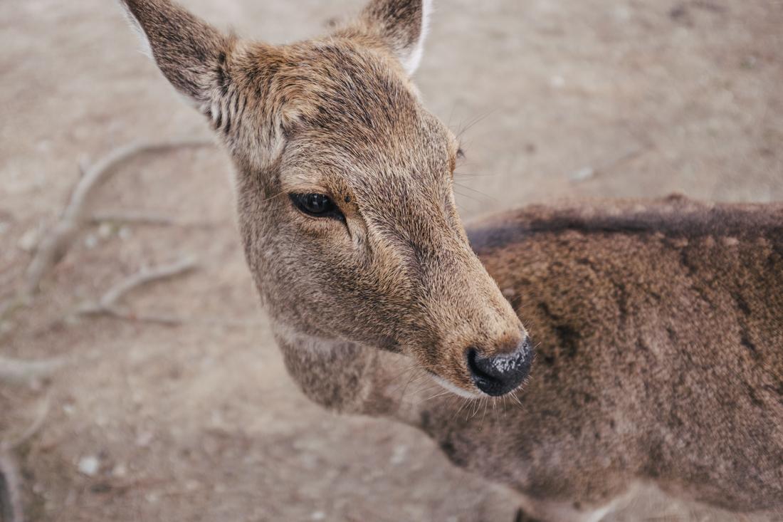 Nara-Park-160306-7