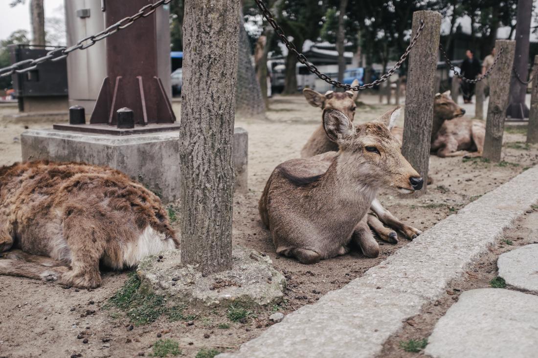 Nara-Park-160306-80