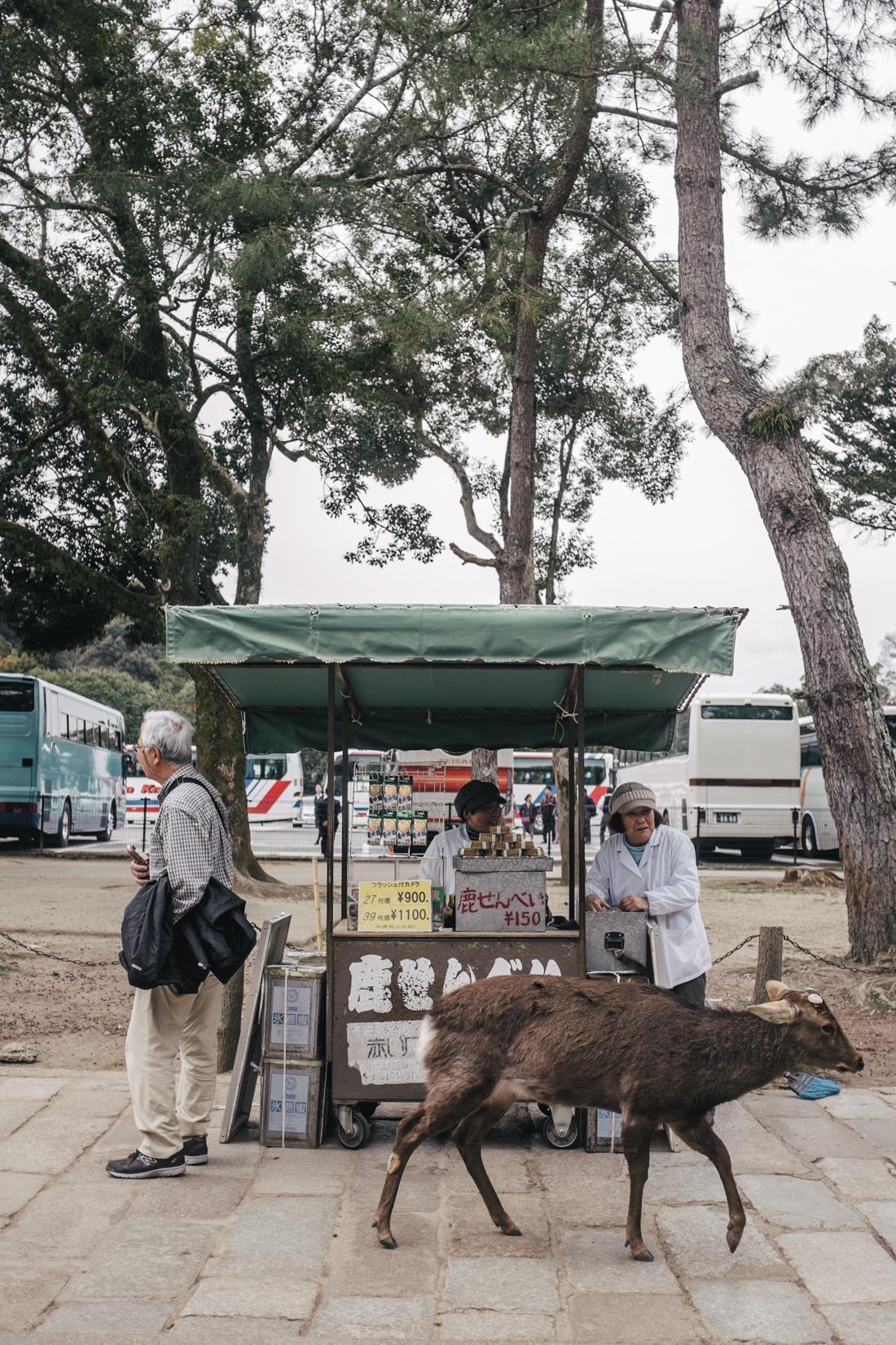 Nara-Park-160306-82