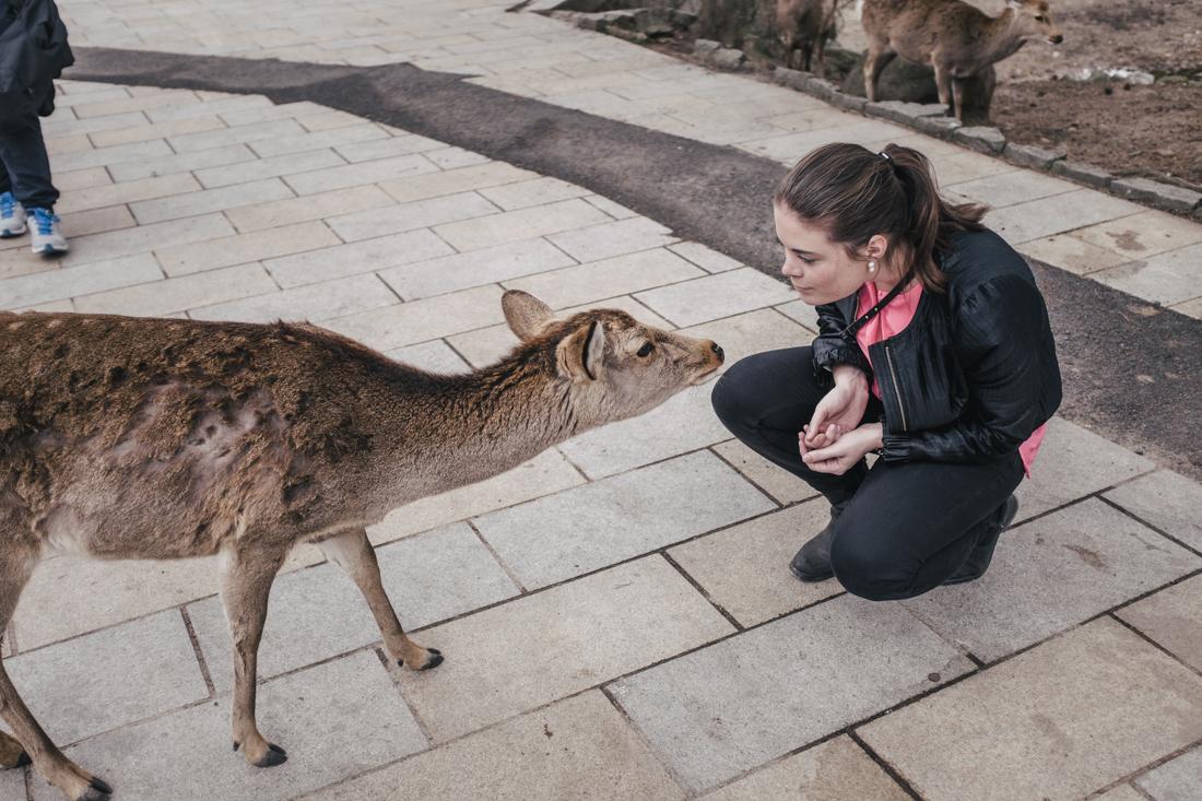 Nara-Park-160306-84