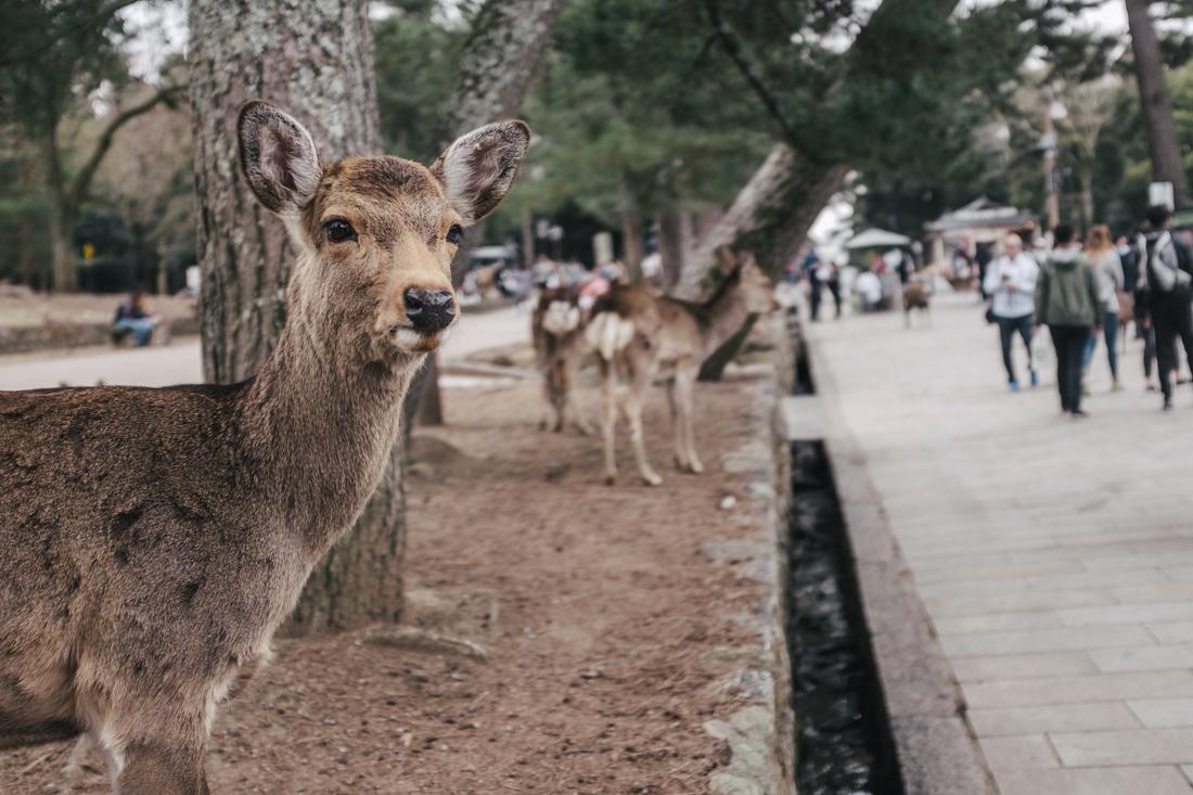 Nara-Park-160306-85